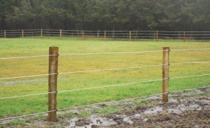 4-Strand White Lightning Fence